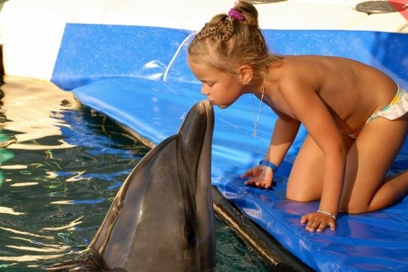 Meet the Dolphins in Marmaris
