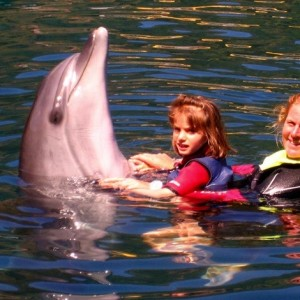 Swim with Dolphins in Marmaris