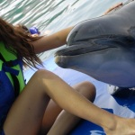 Watch the Dolphins in Marmaris