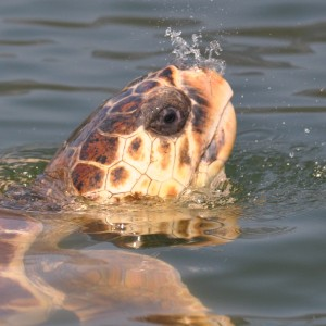 Marmaris Turtle Beach